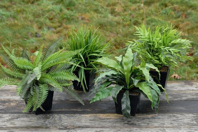 Pflanze im Topf