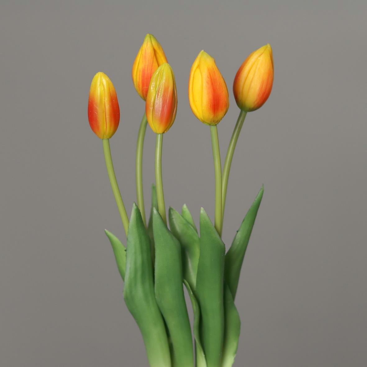 Tulpenbund